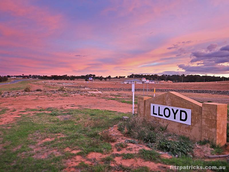 Lloyd Stage 6